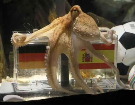 http://scbsradiolombok.files.wordpress.com/2010/07/gurita-paul-octopus.jpg?w=450&h=356